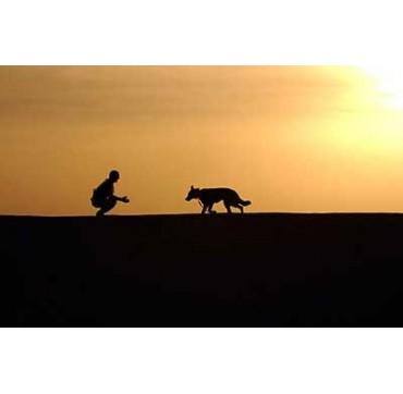 Cura dell'animale