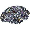 Concentrazione - Memoria